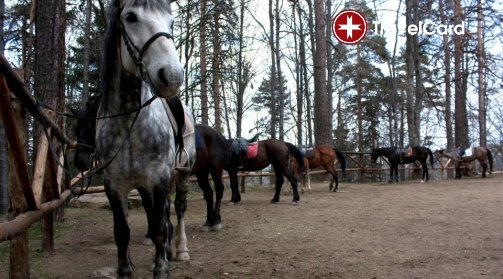 Конна езда за начинаещи снимка 2